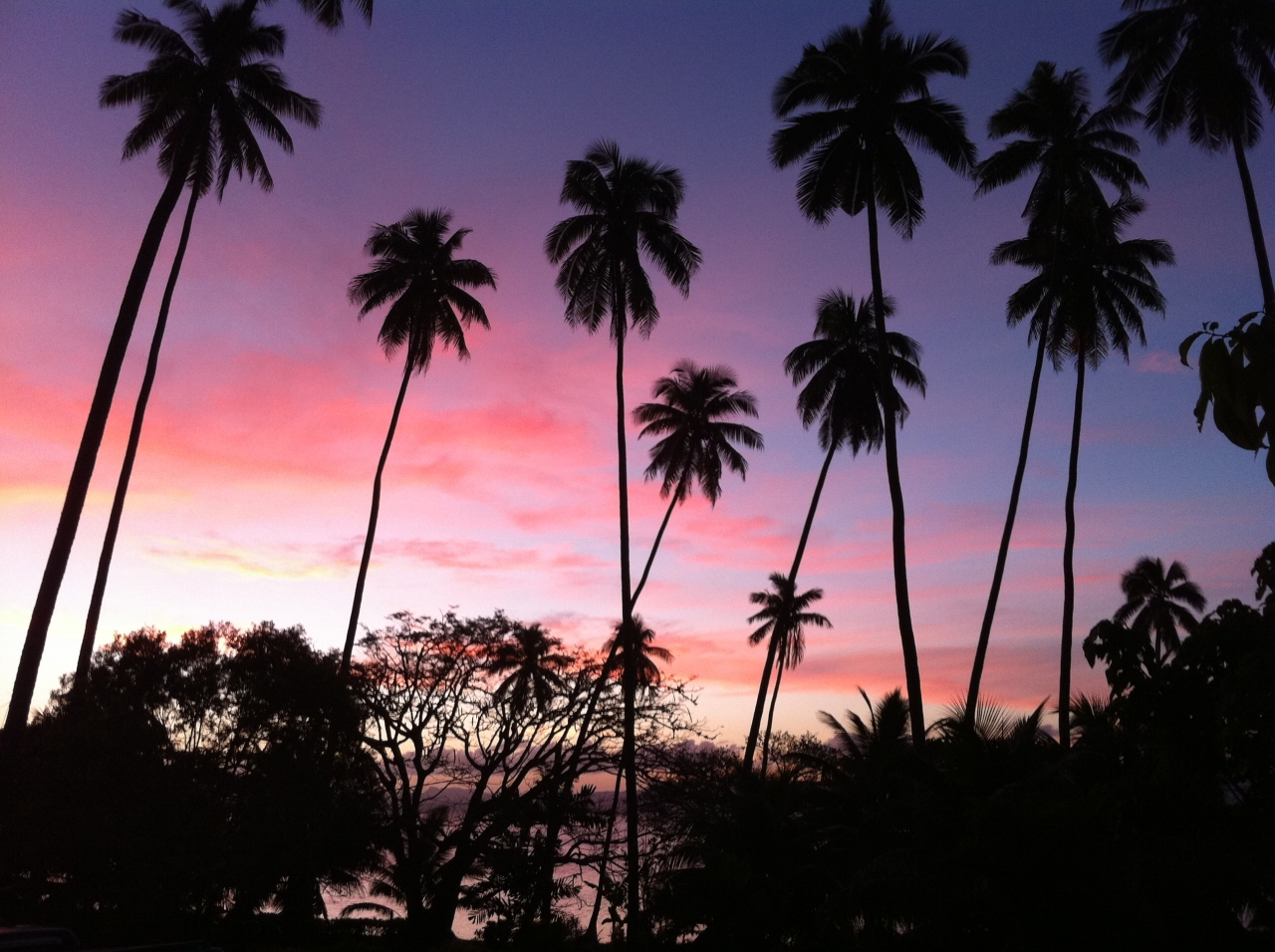 palmtrees fiji sunset